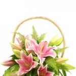 Toko Bunga Hias – Online Florist Jakarta