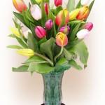 Tips Memilih dan Merawat Bunga Segar by TokoBungaHias
