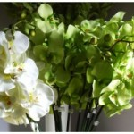 Jual Beli : Rangkaian Bunga Anggrek Bulan Artificial Untuk Dekorasi Kantor Dan Hotel