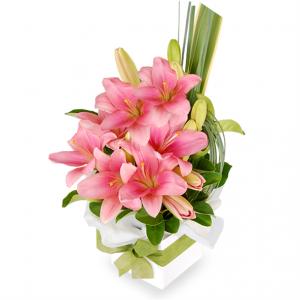 bunga-lily-pink