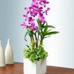 Anggrek sebagai Bunga Meja Artificial Untuk Dekorasi Hari Raya Lebaran