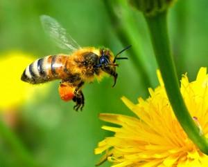 bunga segar dan lebah