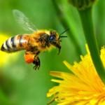 Bagaimana Polusi Udara Mematikan Aroma Bunga Segar