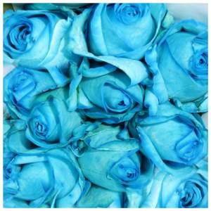 mawar-biru