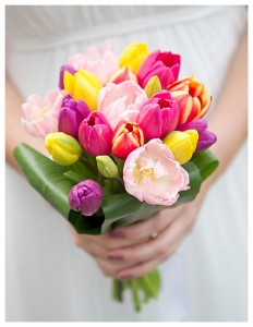 bunga-tulip-untuk-hand-buket-wedding