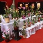 Florist Dan Toko Bunga Di Jakarta Barat