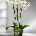 Ucapkan Selamat Hari Ibu Dengan Bunga