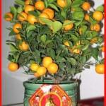 Arti Pemberian Bingkisan Jeruk Pada Tahun Baru Imlek