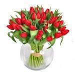 Arti Dan Simbolisme Bunga Tulip Merah
