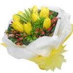 Jual Bunga Tulip Impor di Jakarta