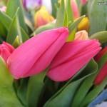 Kenapa Bunga Menjadi Kado Penting