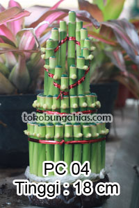 Harga-Pohon-Pacira-PC04