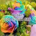 Jual Mawar Rainbow Import Untuk Rangkaian Istimewa