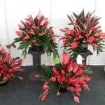 Rangkaian bunga antorium merah