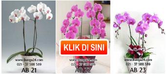 Tips Merawat Bunga Anggrek