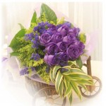 bunga-mawar-ungu-01