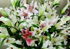 bunga-lily-casablanca-artificial