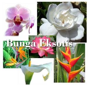 bunga eksotis