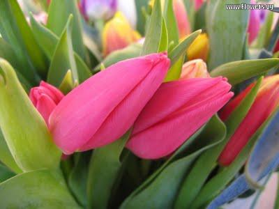 Kado Bunga Cantik