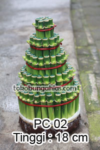 Jual-Pohon-Pacira-Imlek-PC02