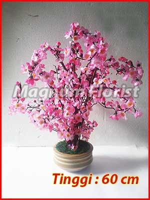 Pohon-Sakura-60-cm