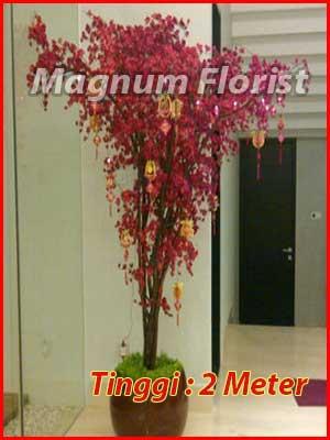pohon-sakura-2-meter