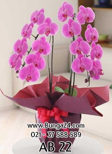 Anggrek-Bulan-Phalaenopsis-Ungu-2-AB-22